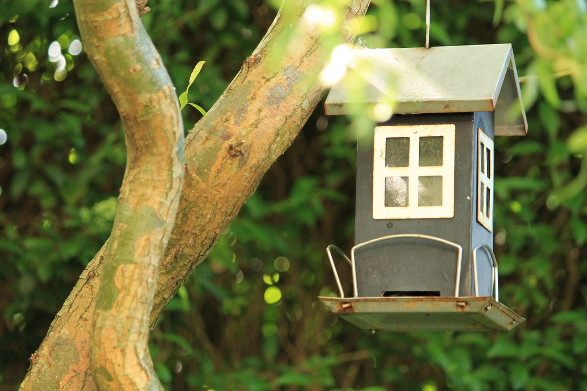 Birds' Feeding House