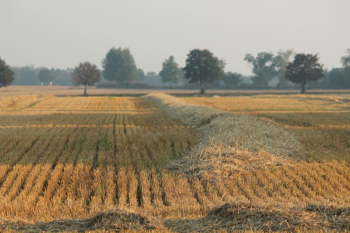 Field in Harvest
