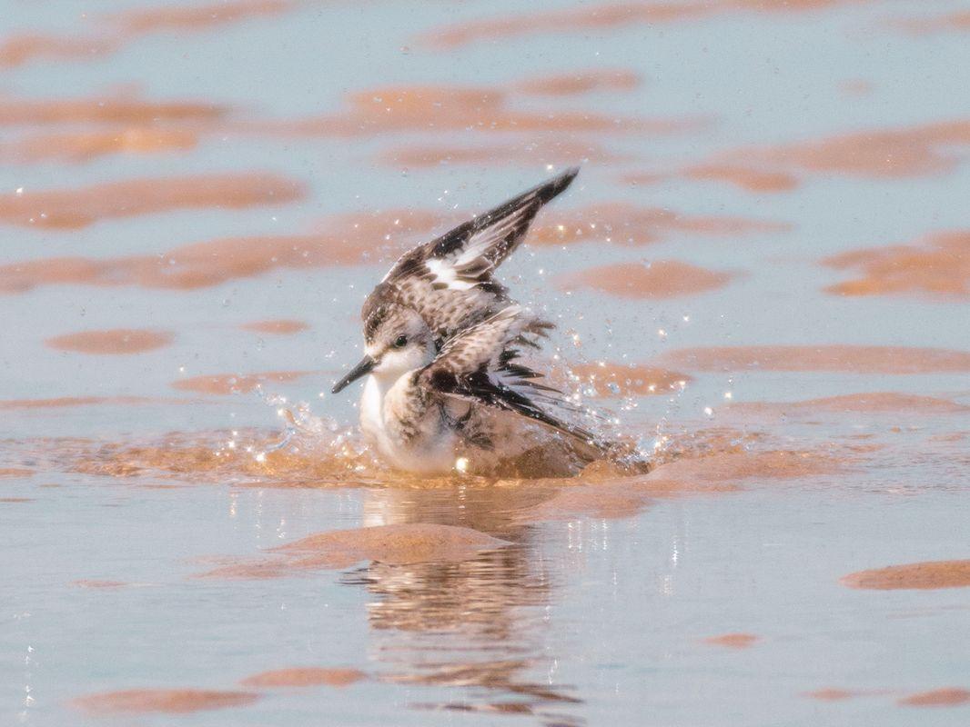 Beautiful Bird at the Beach!