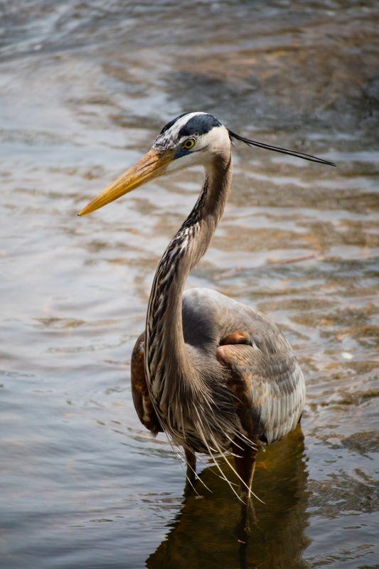 Bird stork or something else like that