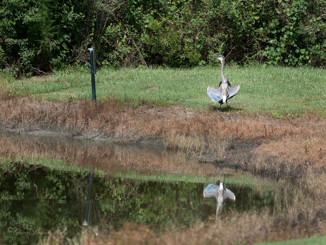 Florida can be hazardous to a cranes life.