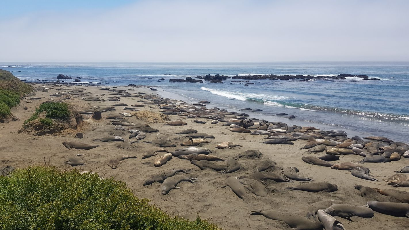 Seals on the West Coast