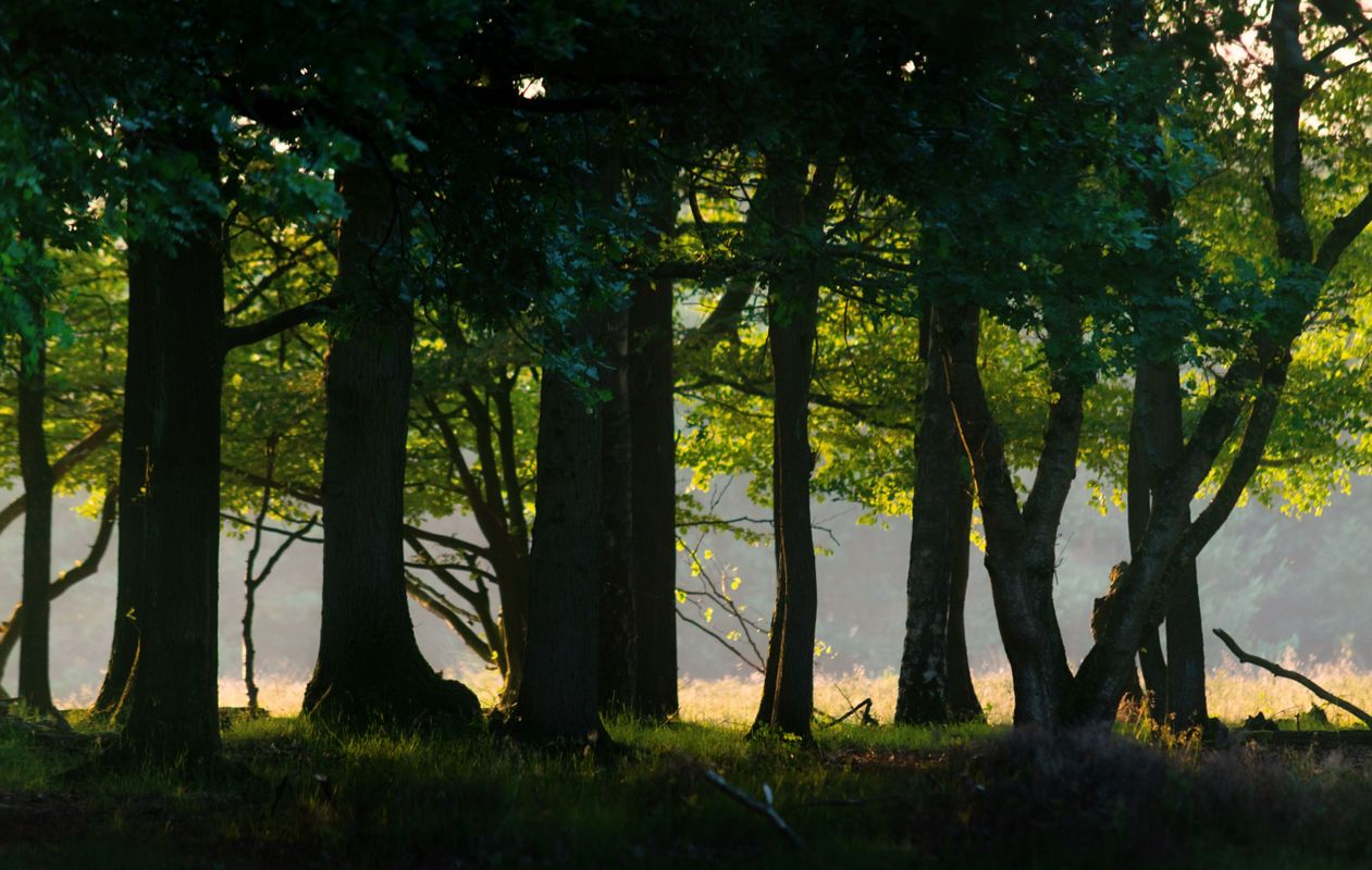 Beautiful Hilversum