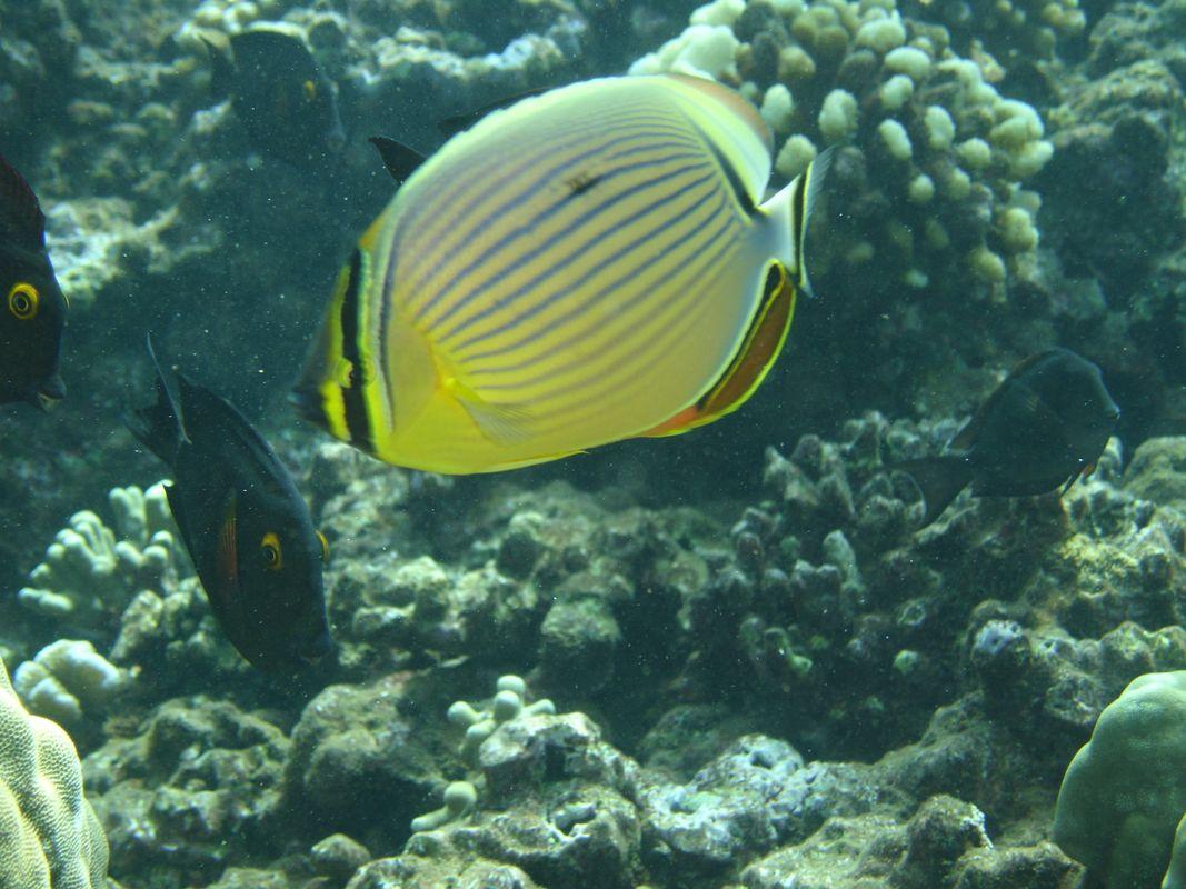 Underwater Butterfly