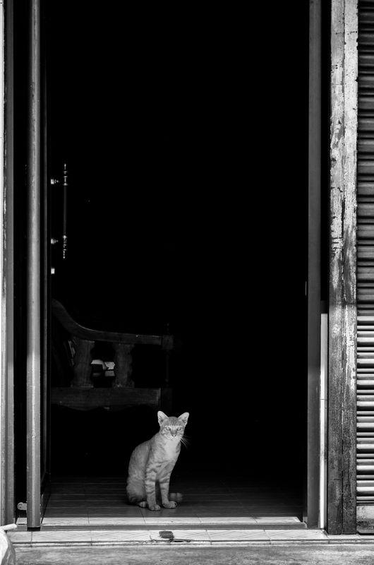 The Lone Cat