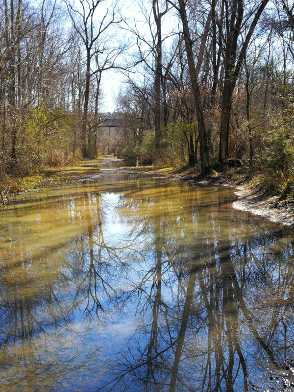 Swamp or mirror?