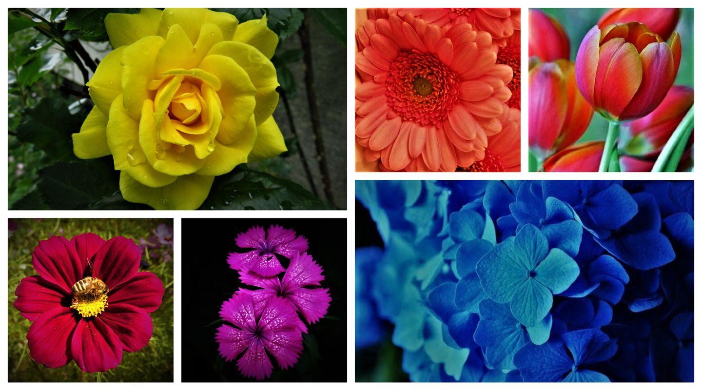 Collage of garden flowers.