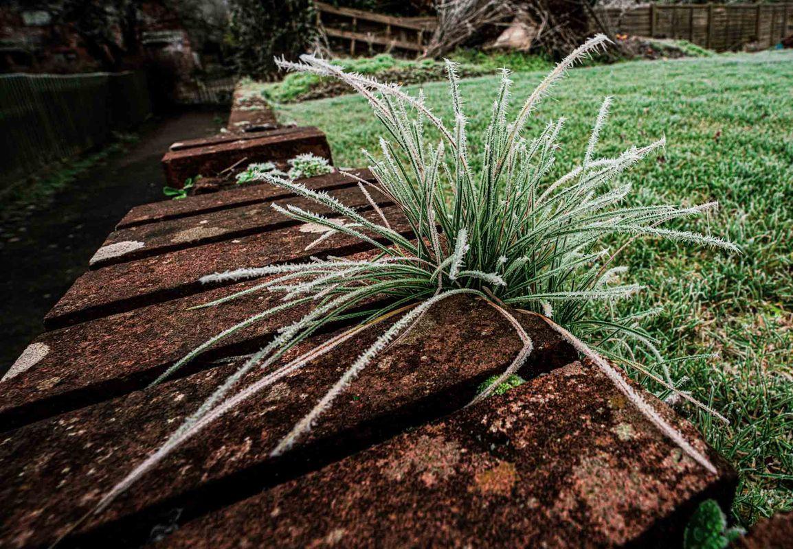 Plant and brick wal