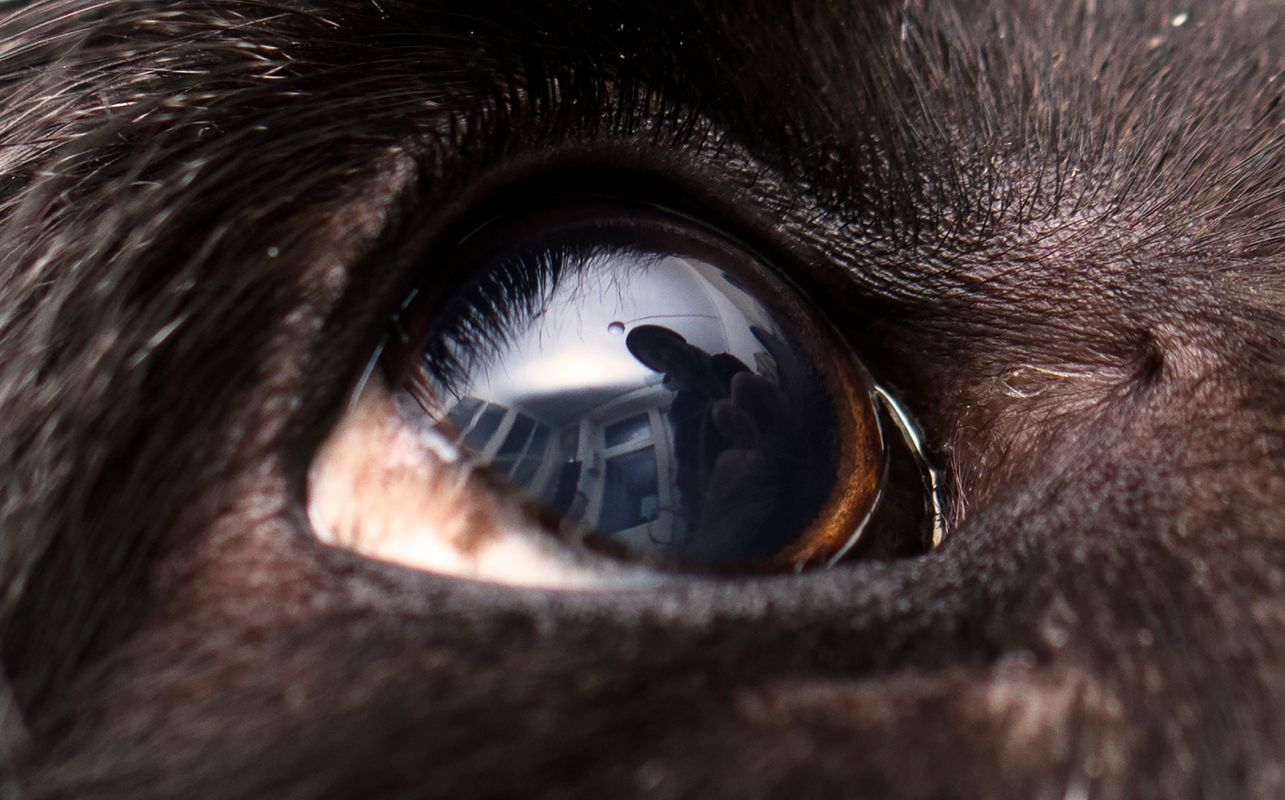 What a dog sees