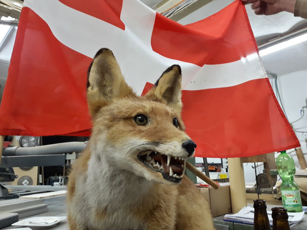 The fox at our party :-)
