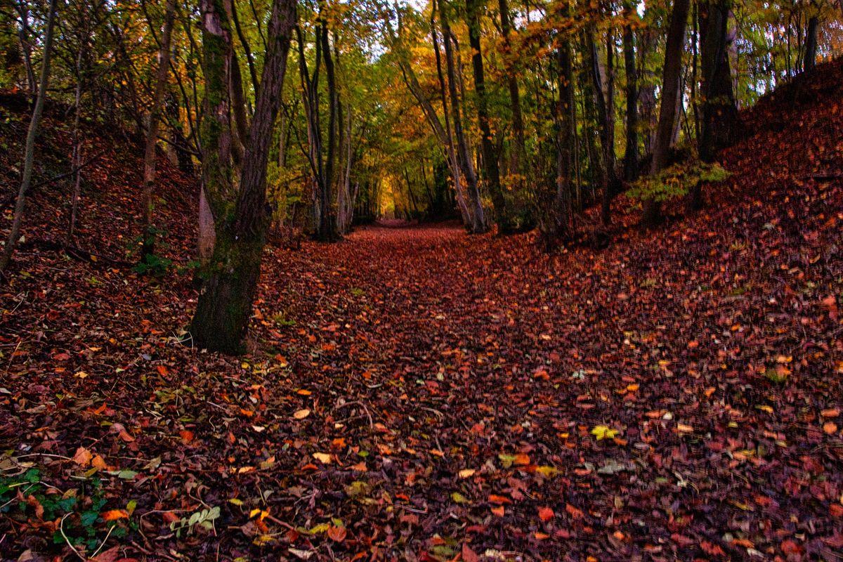 Autumn Colours On Leckhampton Hill