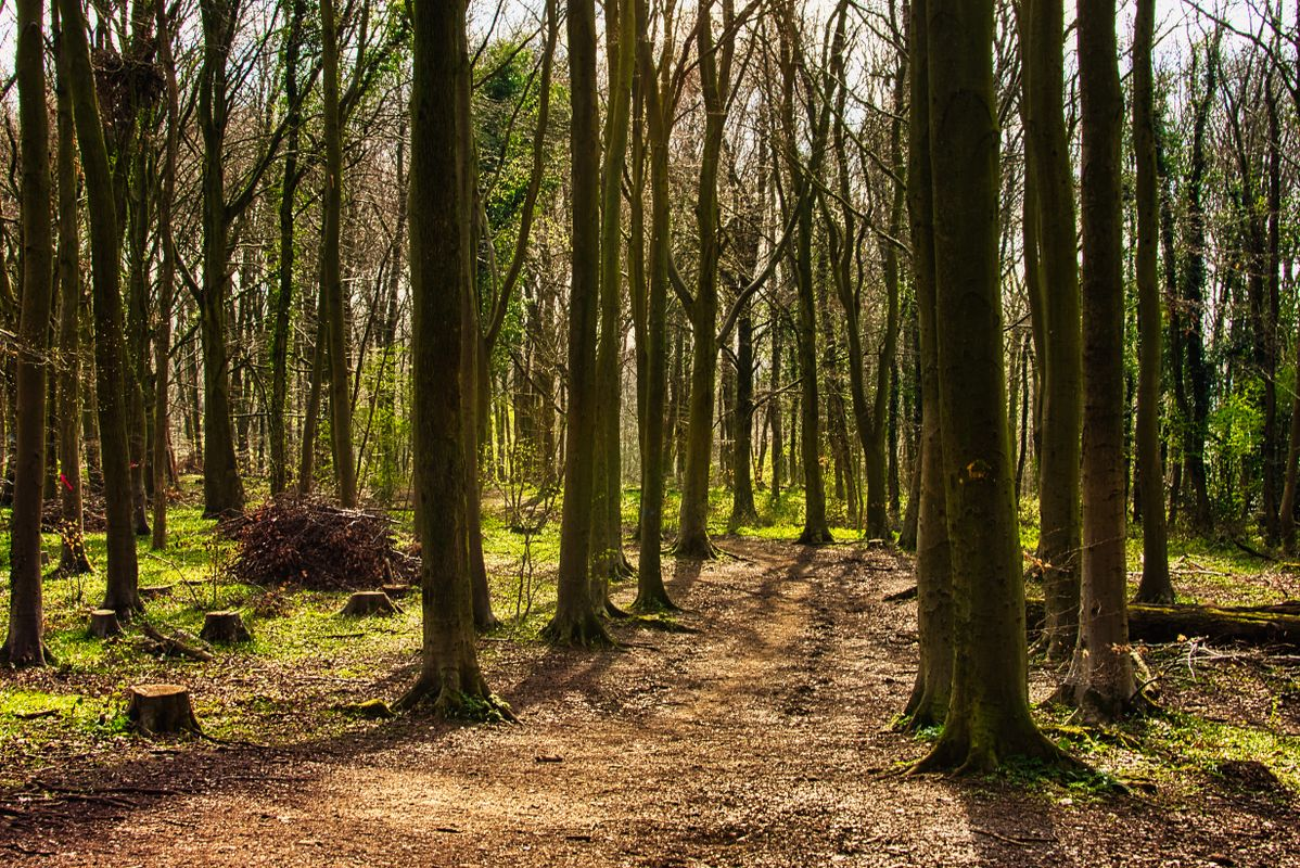 Standish Wood in Spring
