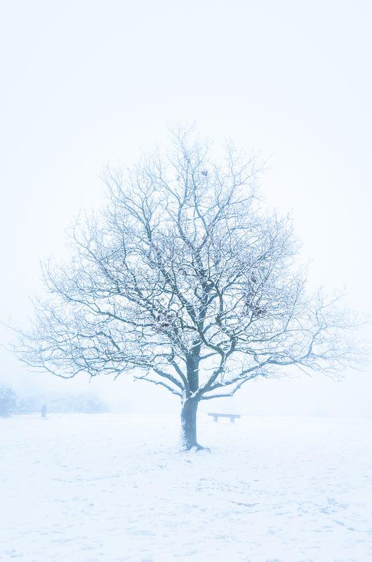 Winter Fog, Leckhampton Hill