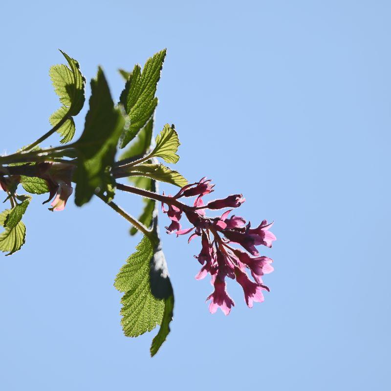 Spring Blossom - 2021