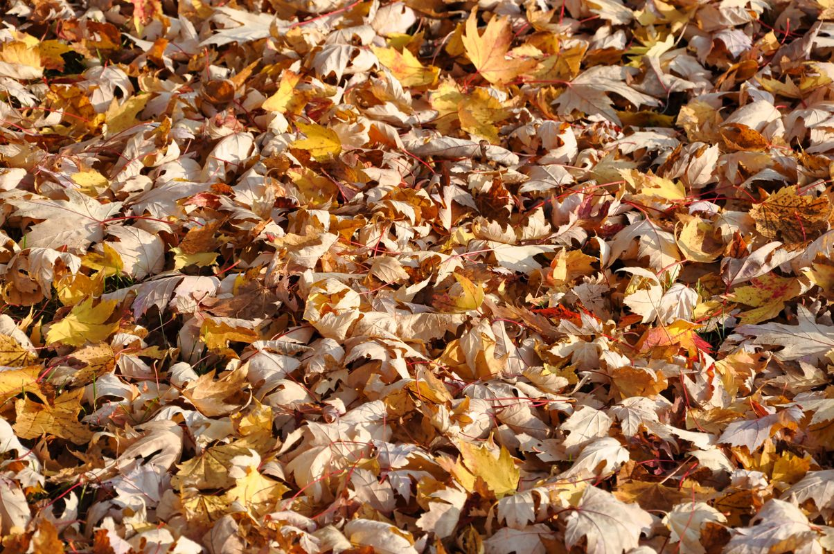 Another Close-Up of Autumn Dead Leaves on the Ground