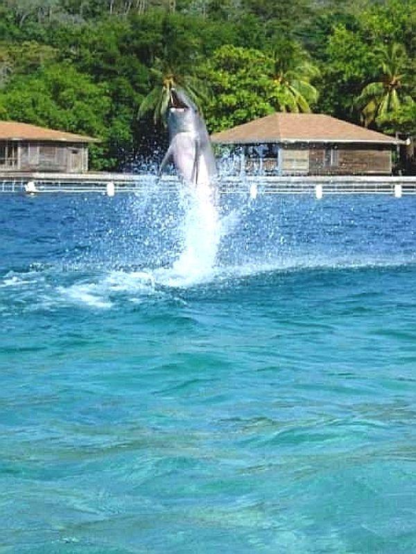 Dolphin dancing