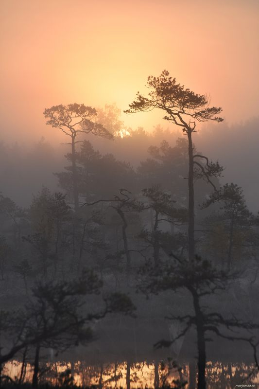 Early in the morning in a foggy swamp.