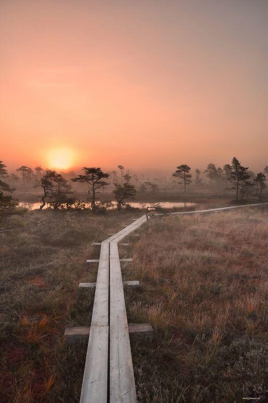 Sunrise in a foggy swamp.