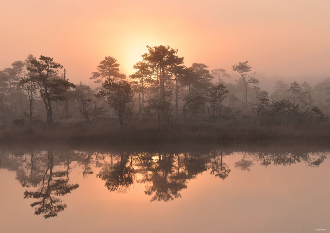 The morning reflection in the bog.
