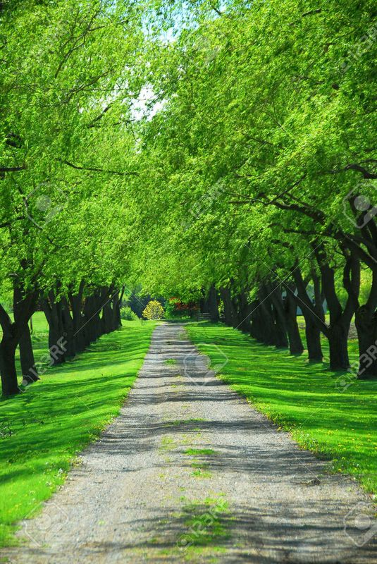441603-lane-of-bright-green-summer-trees-moving-with-breeze