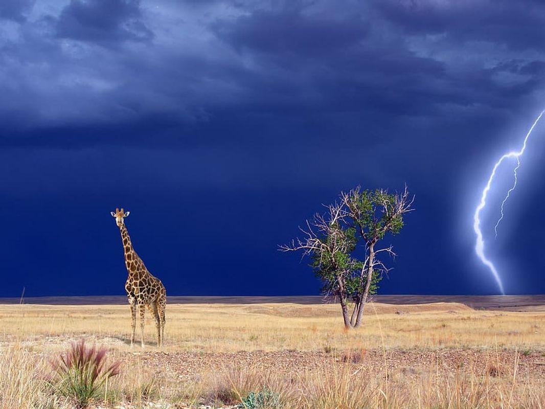 Photos-giraffe-landscape-landscapes
