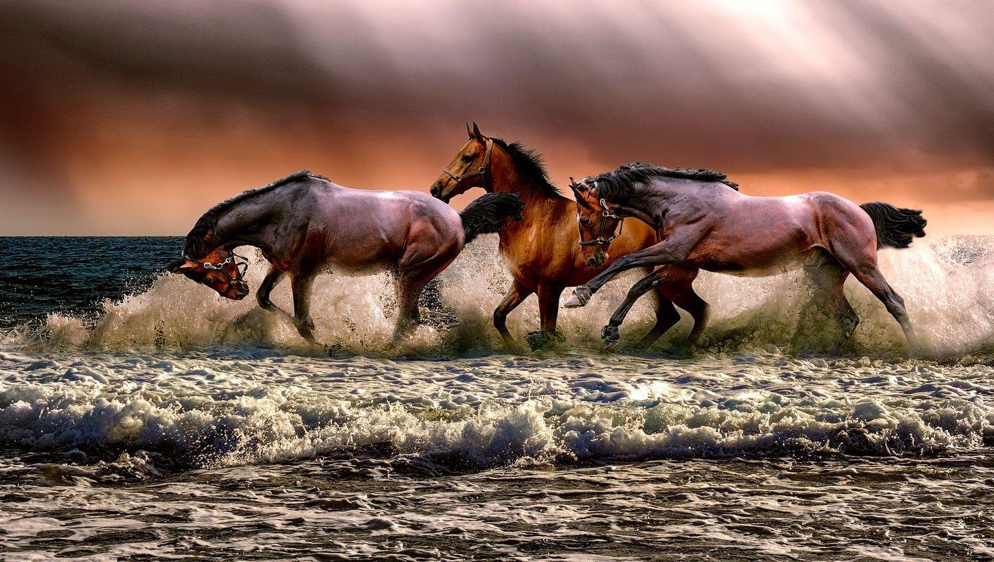 Wild horses accross the ocean