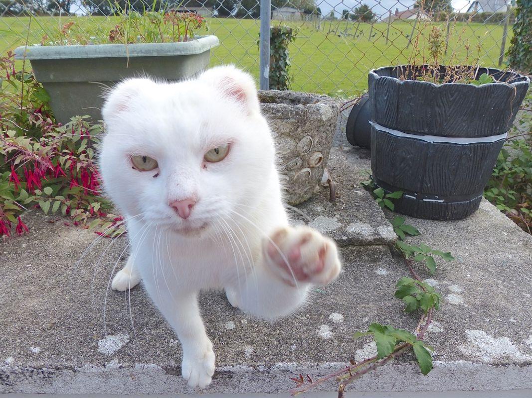 Alfie The Cat