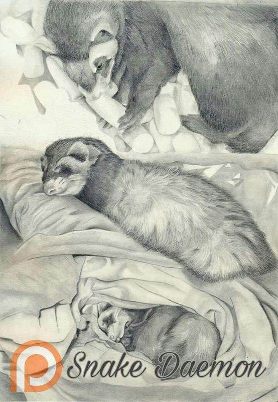 Saying goodbye - drawing tribute of my polecat