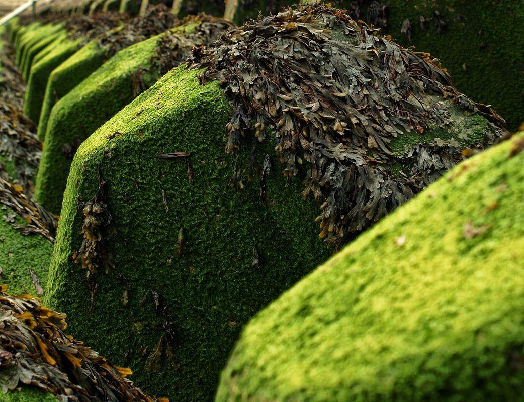 Seaweed Blocks