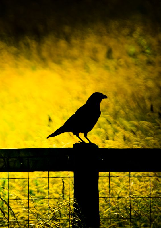 Poe Raven Sunset
