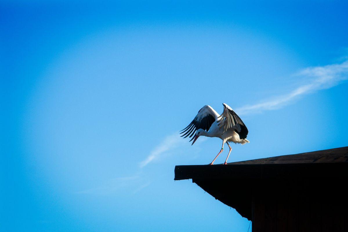 Stork on the roof - Safari Park