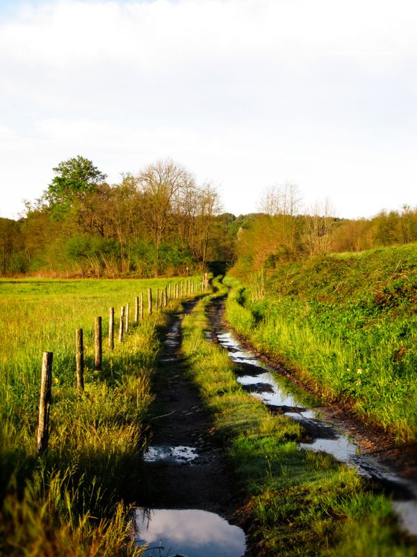 Trail after the rain