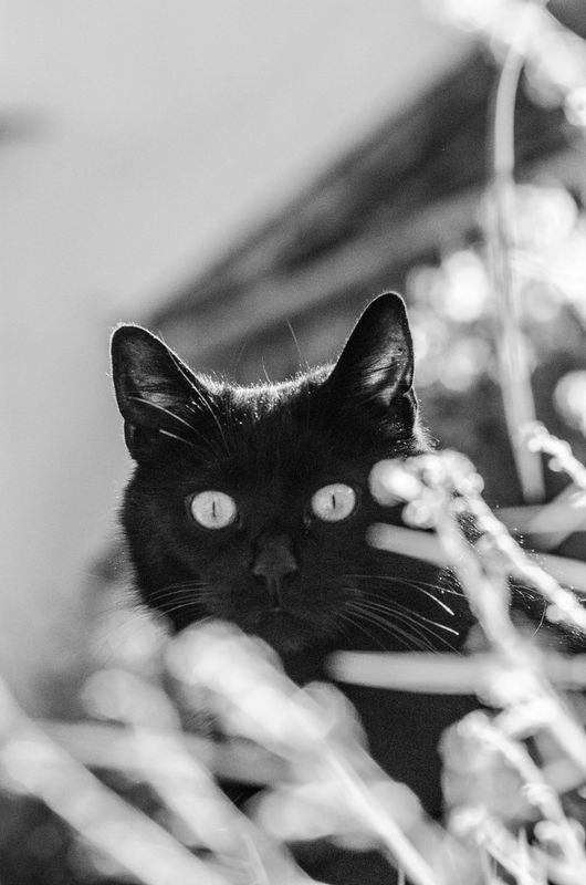 Souixsie Cat