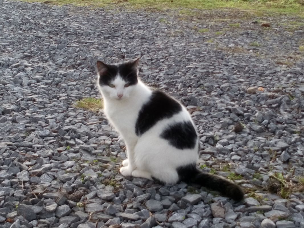 White and Black Female Cat Sitting On the Stone