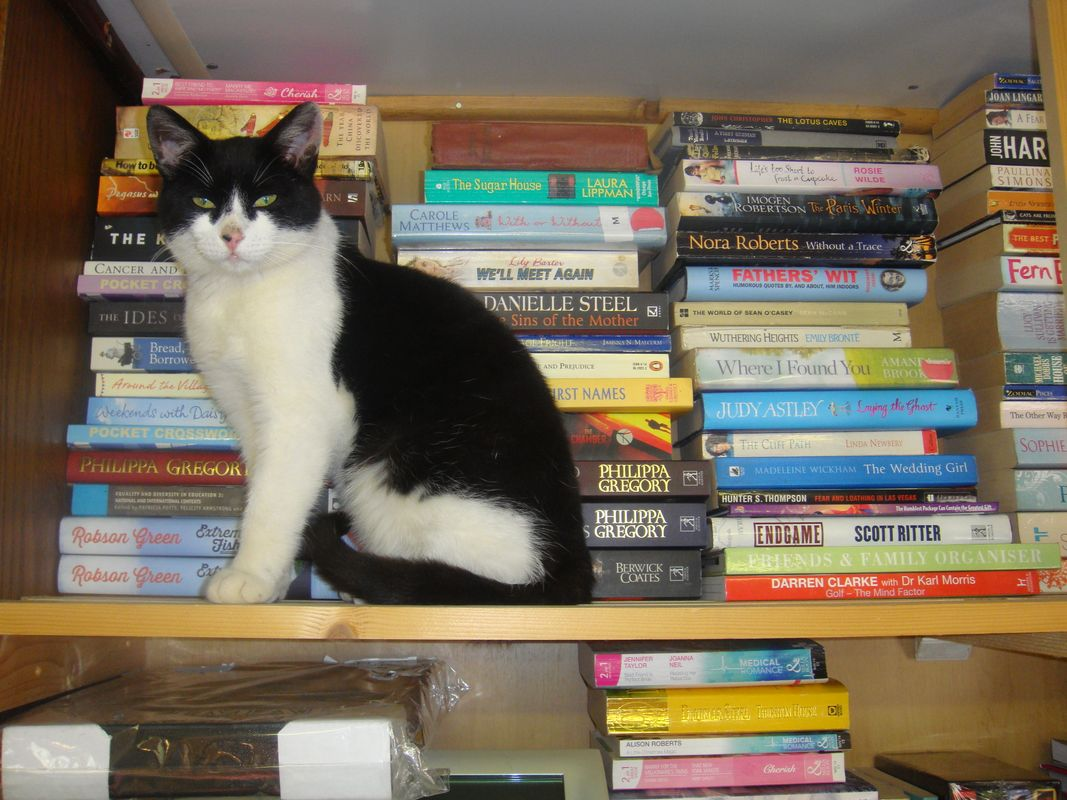 Black and White Cat Sitting On The Book Shelf