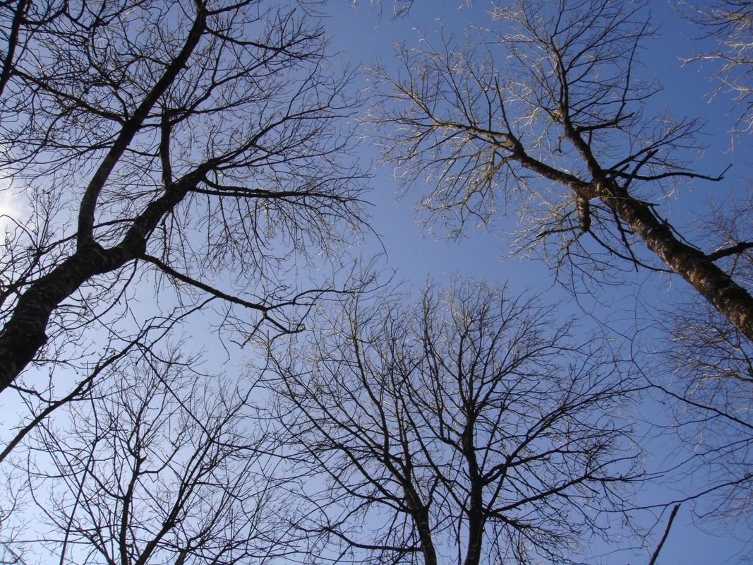 Bare Trees Small Branches Leafless Under The Blue Sky