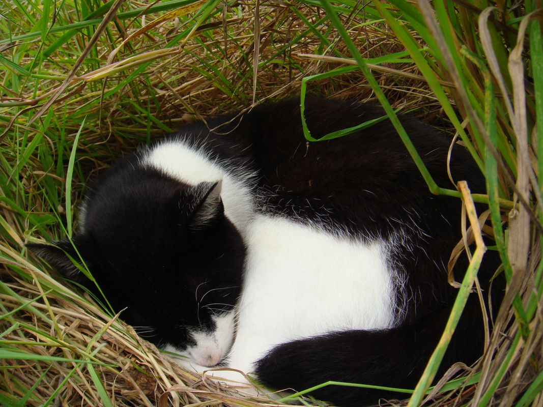 Black and White Cat Sleeping On Her Nest During Summer