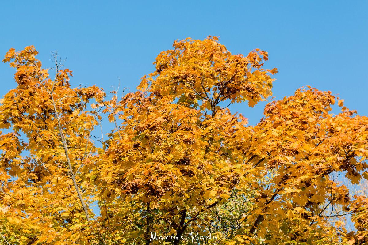 Autumn vivid colors