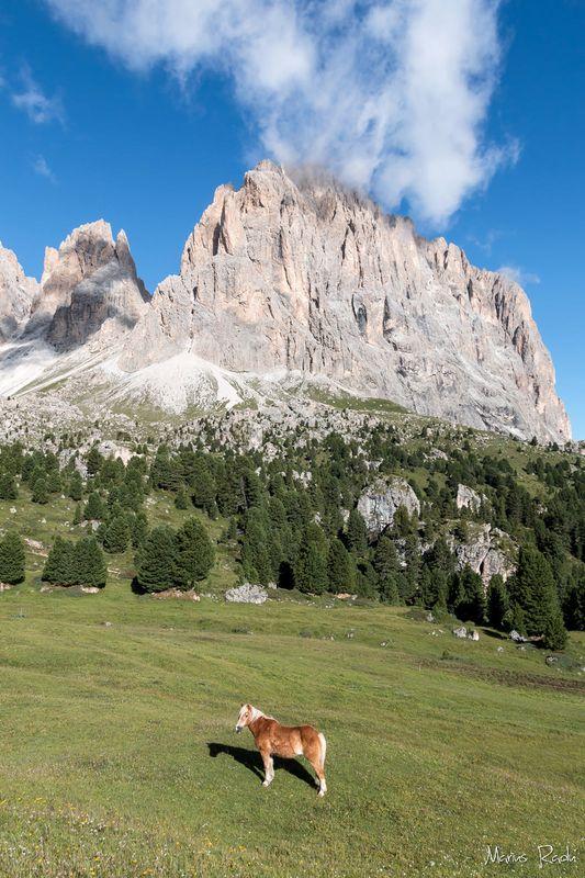 Dolomites horse
