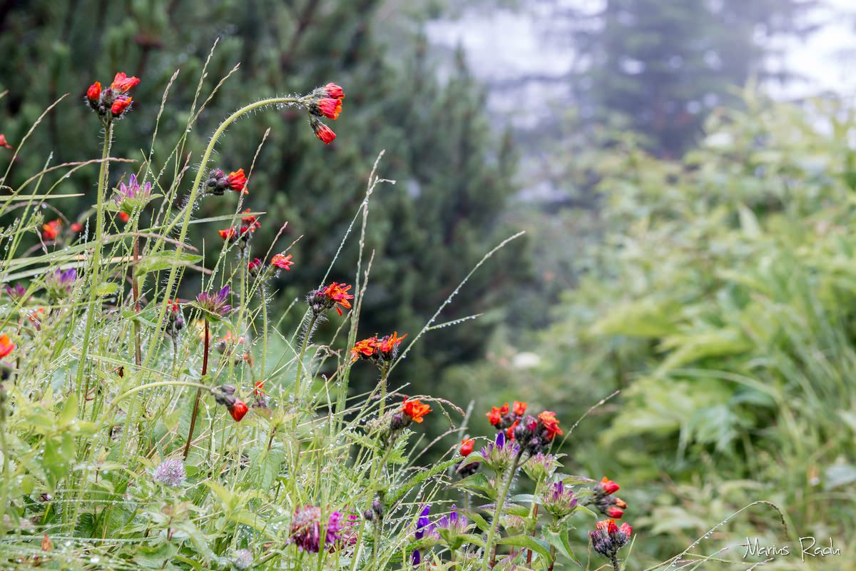 Summer vegetation