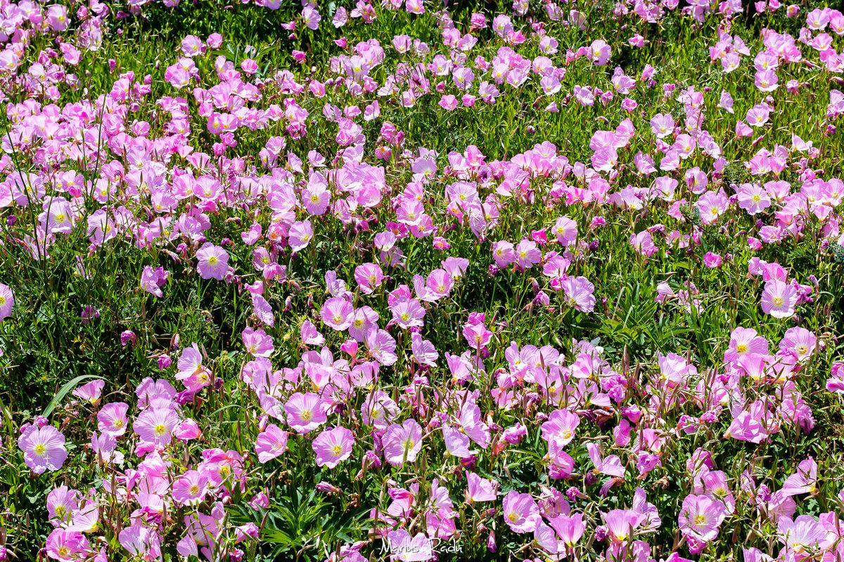 Happy bloom