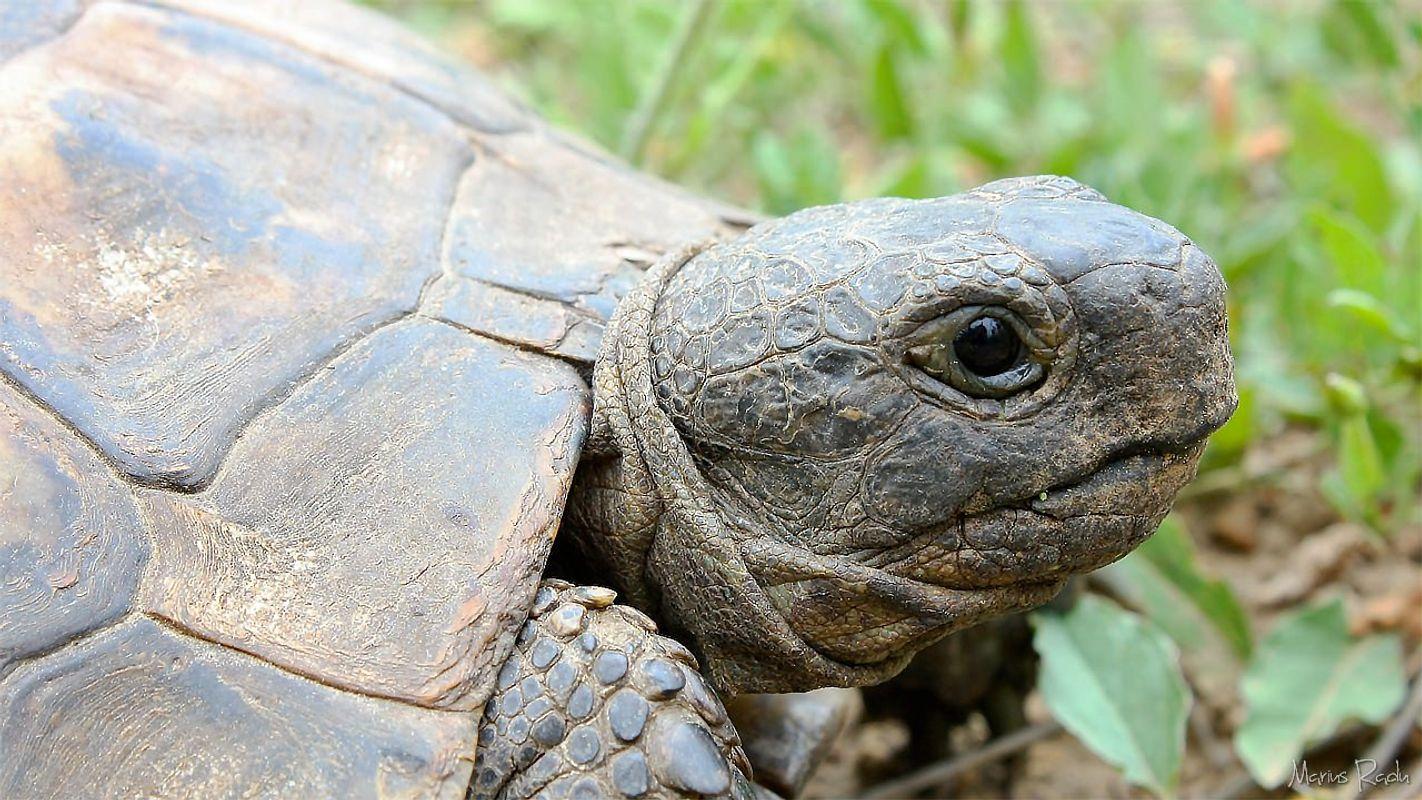 Old timer turtle