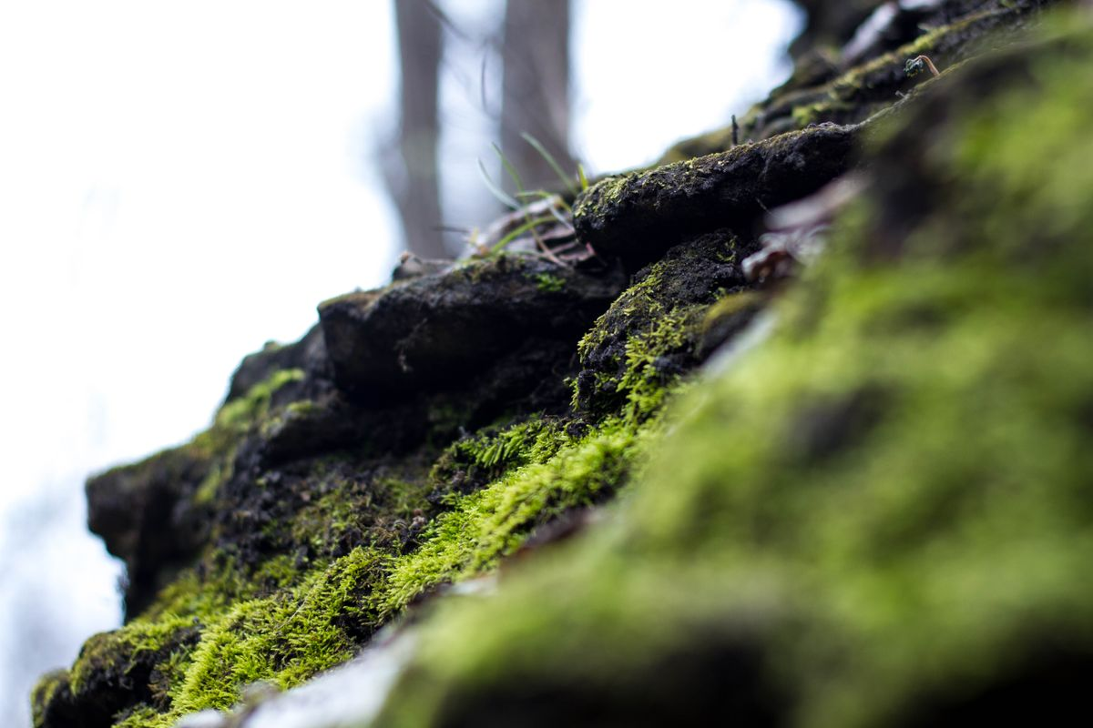 Moss on the Hill