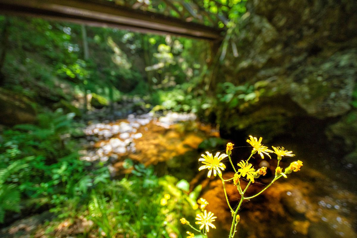 Yellow flower in the canyon