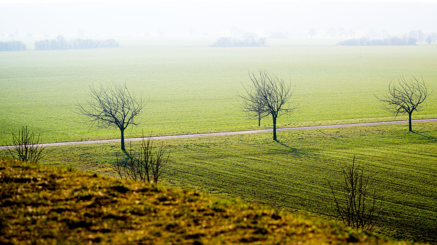 Misty landscape with trees