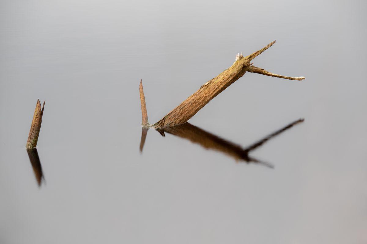 Branch in moor