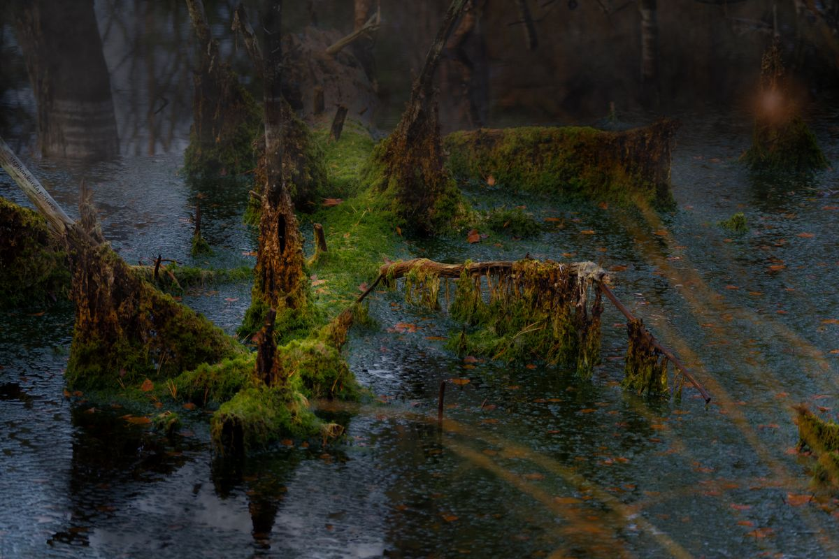 Spooky moor (a picture - not just a photo)