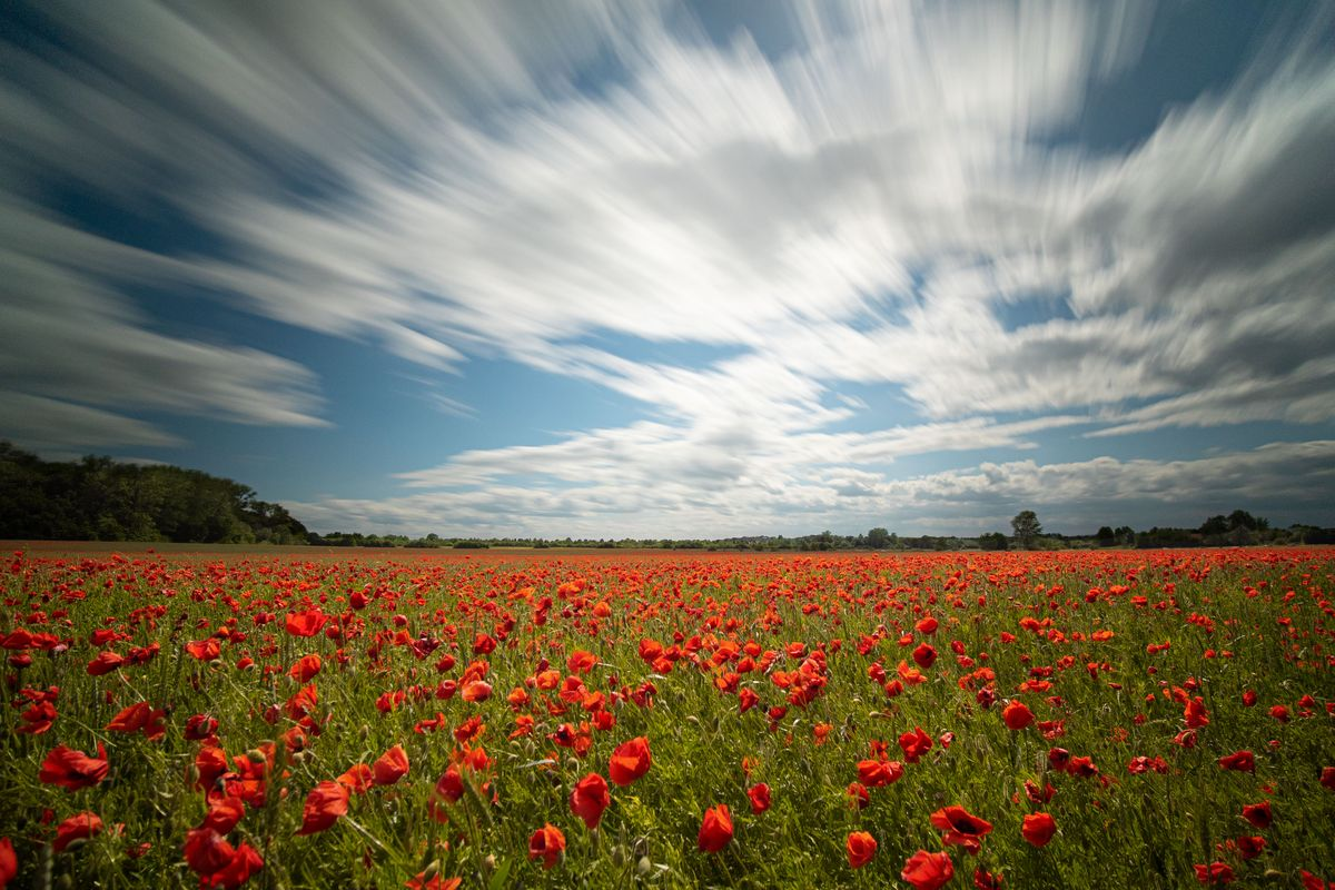 Poppies with moving clouds