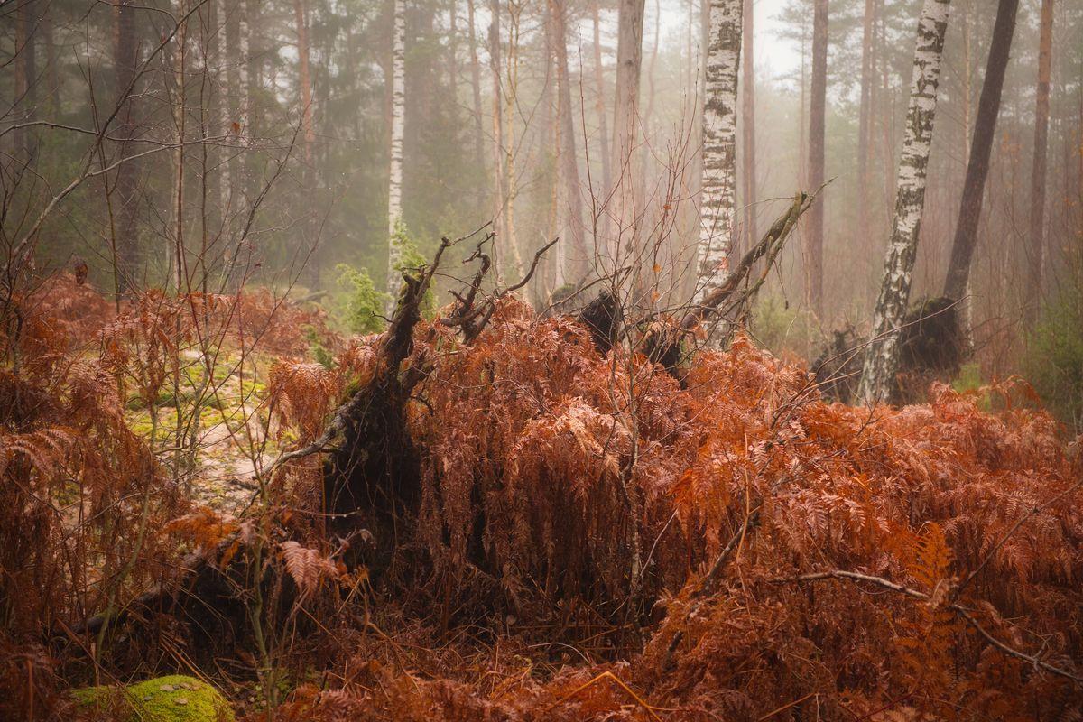 Misty woodland 2