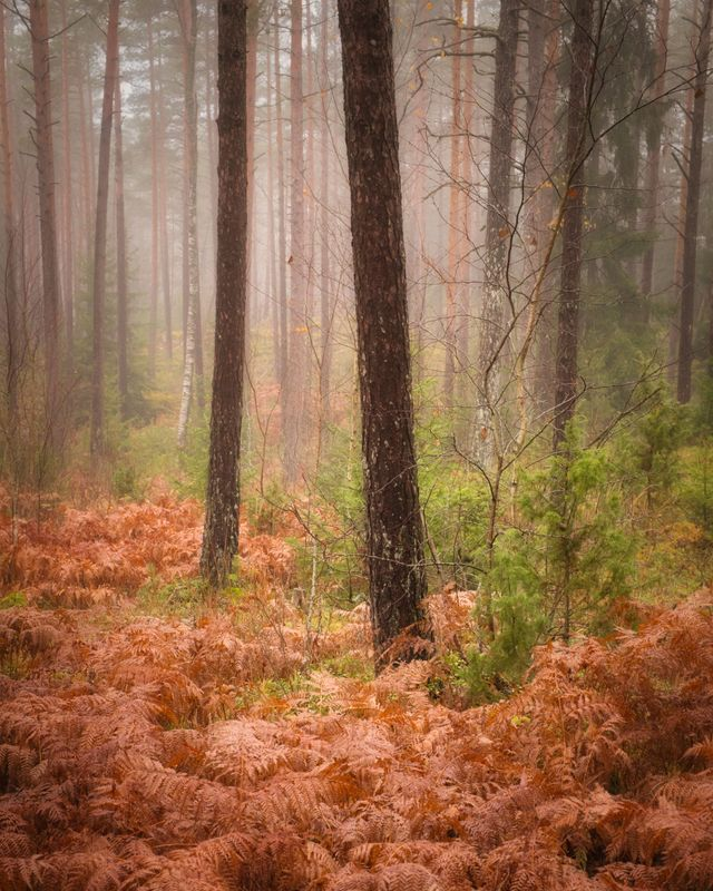 Misty woodland 6
